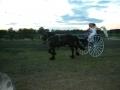 Glindow und Pferdeveranstaltung